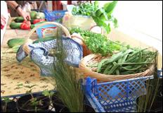 Ventnor Community Cafe: Local Produce Sale