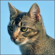 Hobbes the cat