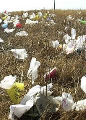 Ventnor Plastic Carrier Bag Free