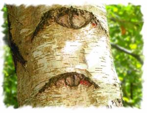 Wihtyar Tree Essences